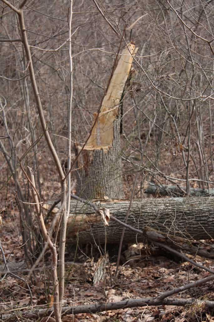 sxs broken tree