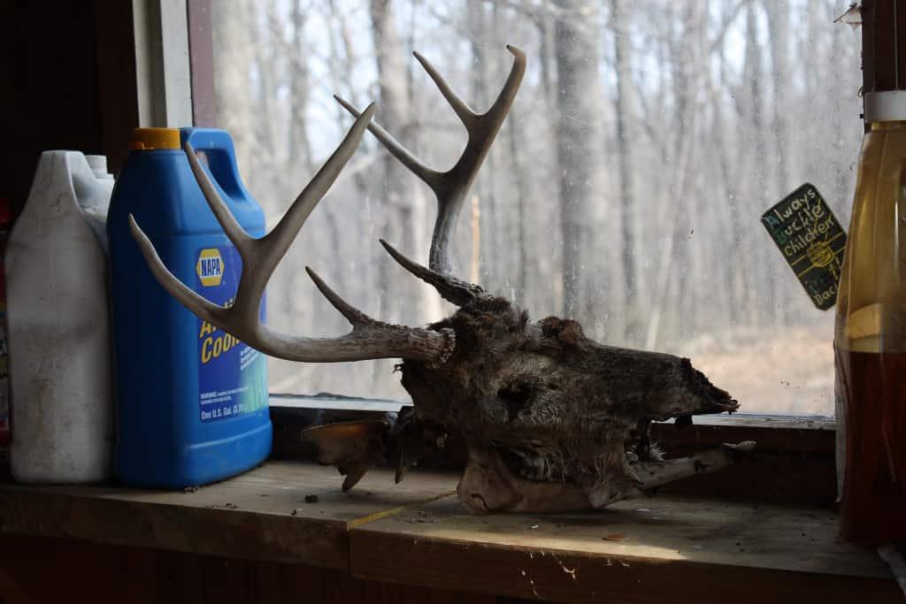 sxs deer head