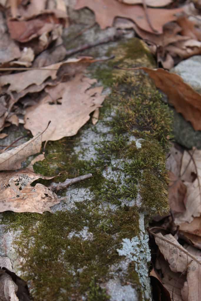 sxs mossy rock
