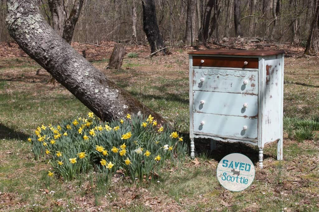 Antique heavily distressed dresser finished and displayed in a field of daffodils next to a bent trunk tree.