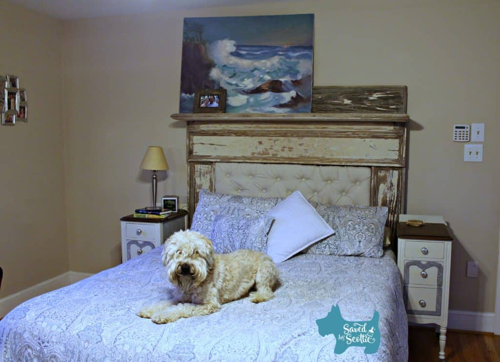 Finished tufted headboard in place with cute dog on bed