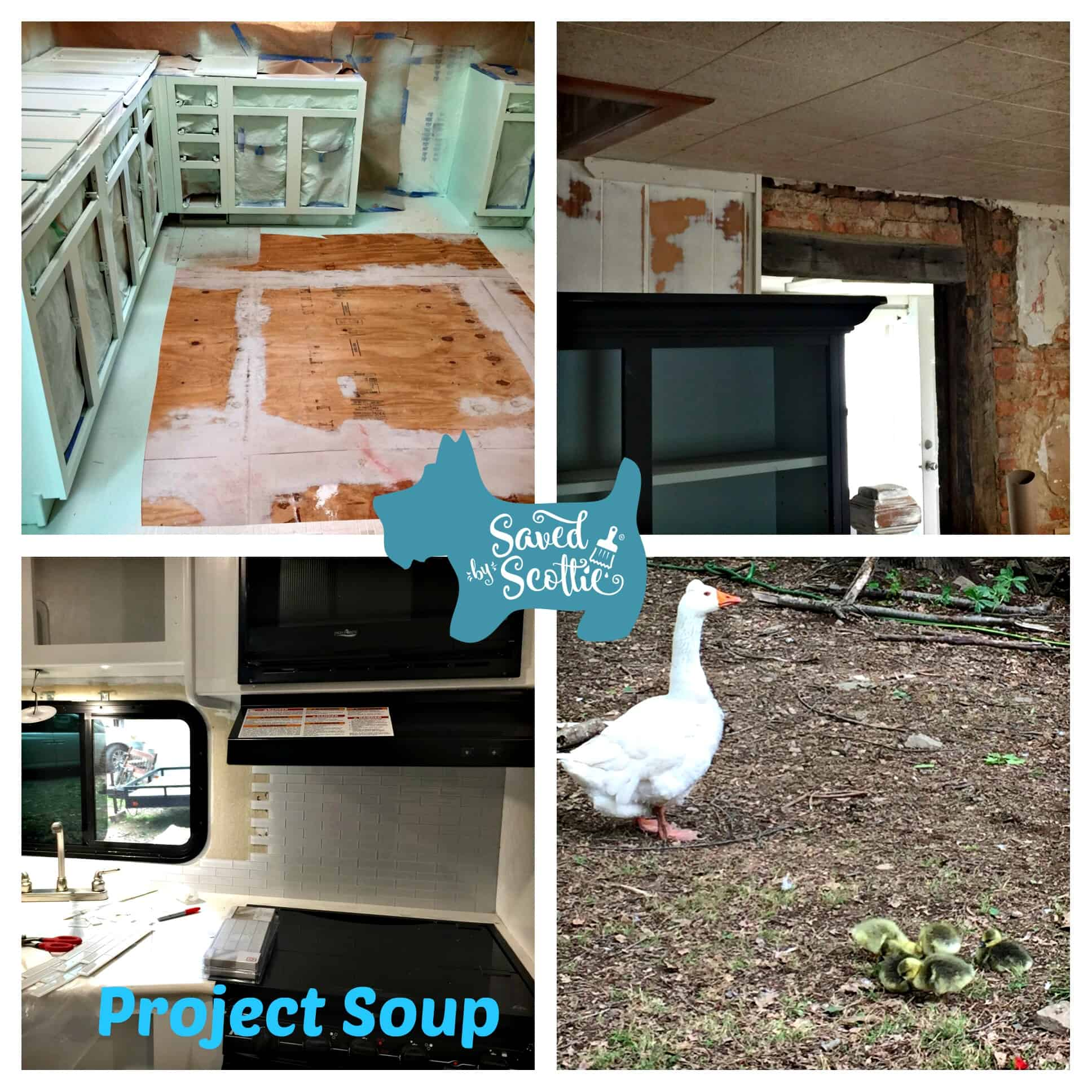 Saved by Scottie Project Soup