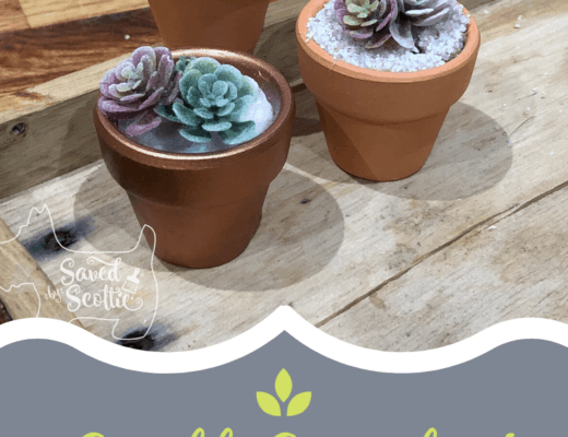 tutorial for small succulent teacher gifts. three small succulents pictures on wooden tray with website link savedbyscottie.com listed at bottom