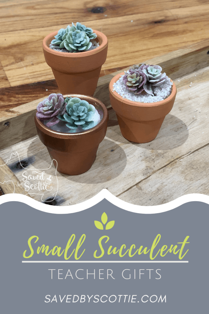 three small succulent pot teacher gifts on wooden tray