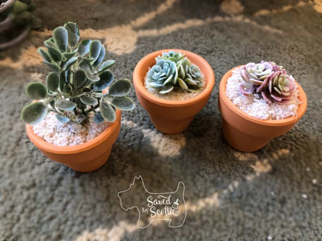 three pots of small faux succulent decor on a patterned rug